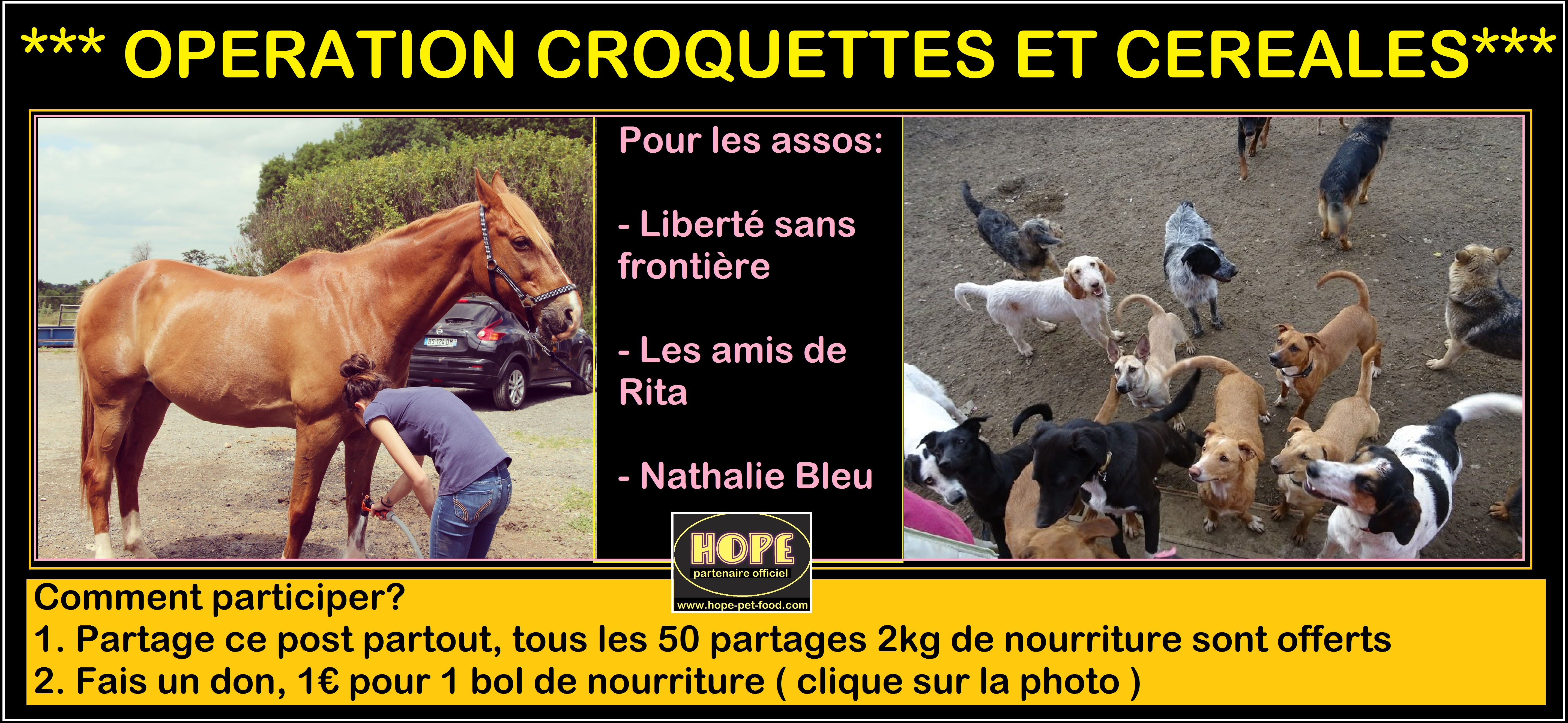 solidarite Hope protection animale