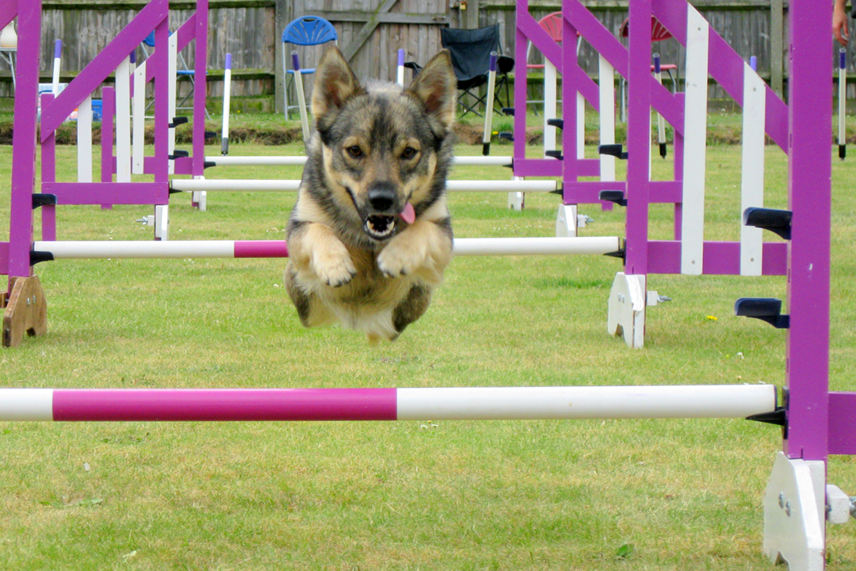 agility cani cross ecole du chiot centre canin ballade chiens